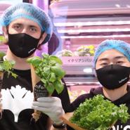 店内で新鮮野菜を栽培!?都市型農場野菜のプラットフォーム「Infarm(インファーム)」がアジア初ローンチ!!